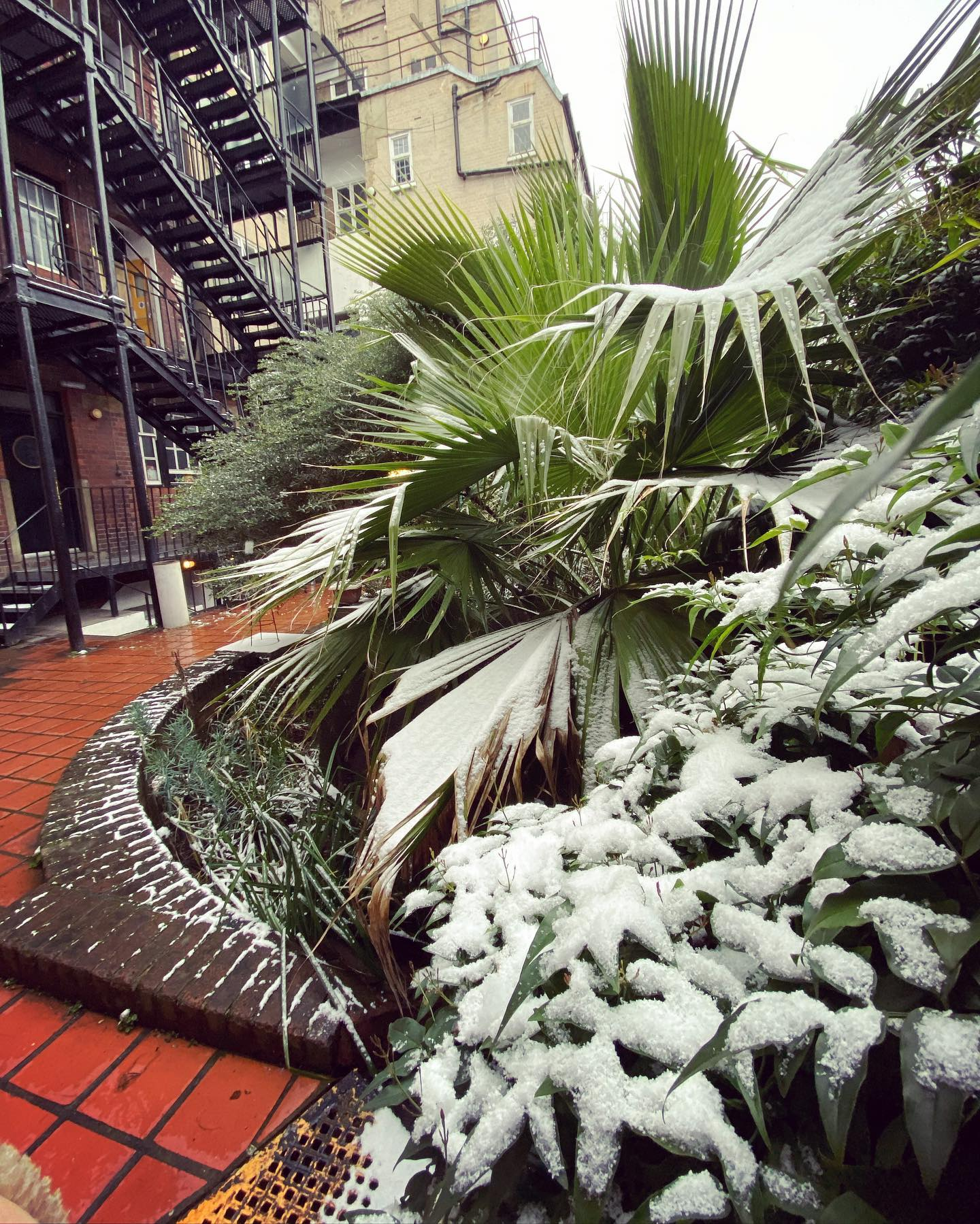 So happy to finally see some snow settling in our garden at Louise House ☃️️☃️️ . . .